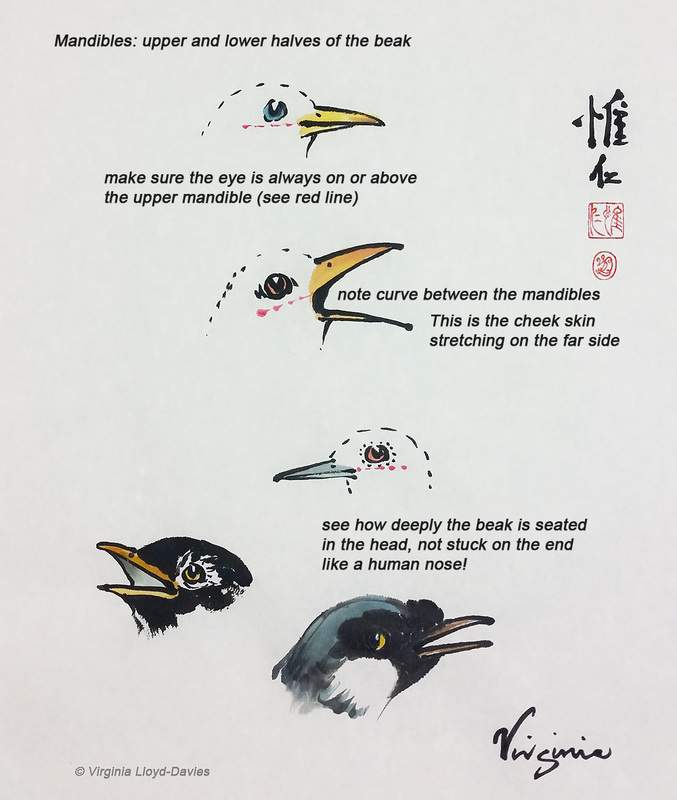 Picture of bird beaks painted in Chinese brush technique, with annotations