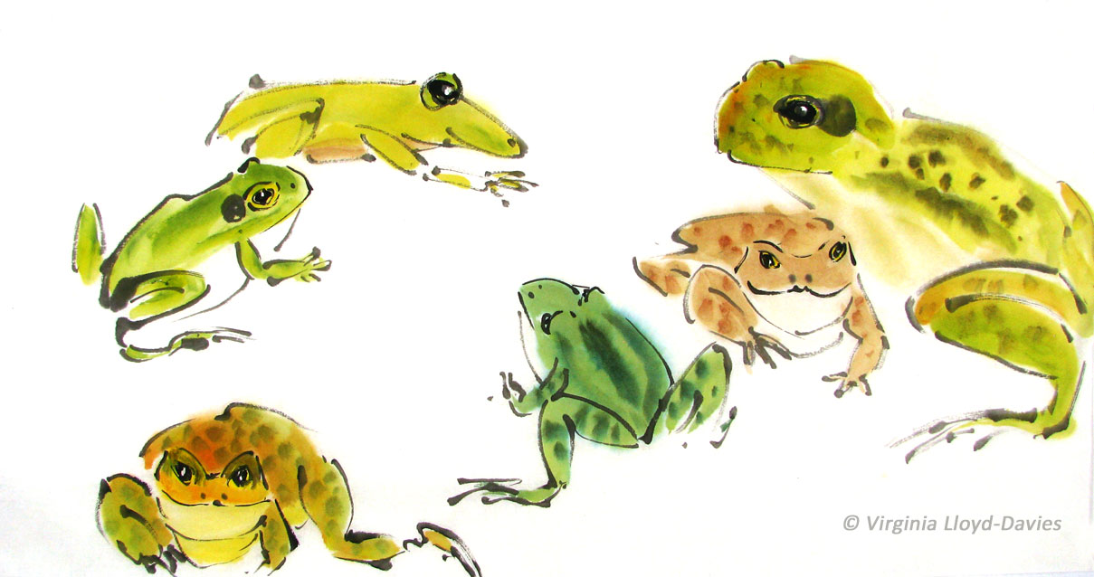 Several different kinds of frogs in brown, green and yellow watercolor Picture